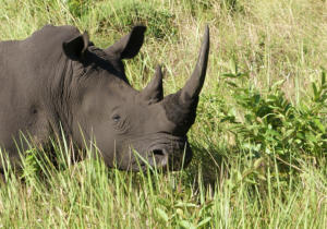 NA-1STAR-001-1167558-Save the Rhino-Erika Stander