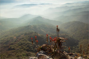 NA-2STAR-001-1185074-Aloe at Valley of a Thousand Hills -Marie Helberg