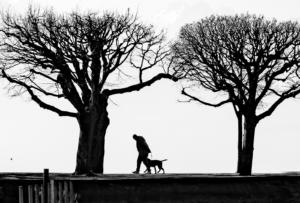 MO-2STAR-001-1317127-Man and Dog-Andrew Pike
