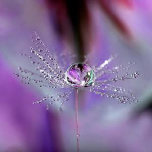 Iris In A Bubble